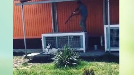 Снявший видео расправы над собакой оштрафован на 00