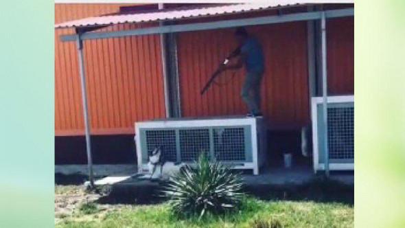 Ташкентец Сардор снял на видео убийство и расчленение своей собаки