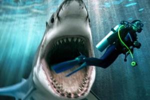 Пропавшего иностранца нашли в желудке акулы