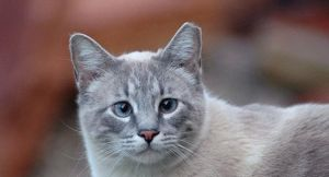 В Узбекистане появились кошки с отрезанными ушами