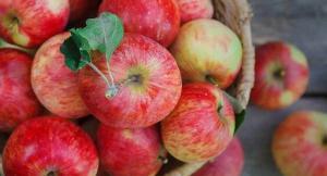 Медики рассекретили пользу яблок для здоровья