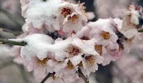 Заморозки в Таджикистане взвинтили цены на сухофрукты в Узбекистане