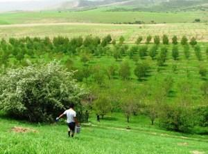 Сделку по продаже участка в Бостанлыкском районе за  млн сорвали в Ташкенте