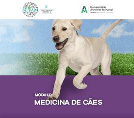 Módulo Teórico de Medicina de Cães (Noturno)