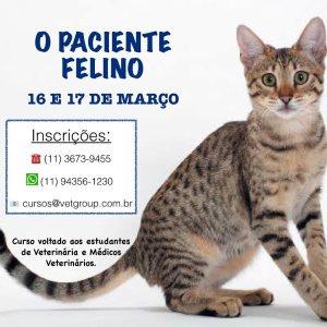 Curso O paciente Felino HOVET POMPEIA