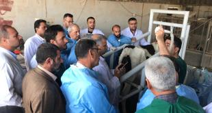 training of students in faculty of veterinary medicine about Sonar applications in veterinary field