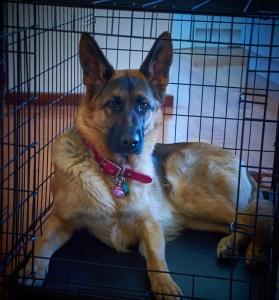 Atrofia muscular tras lesión o cirugía veterinaria