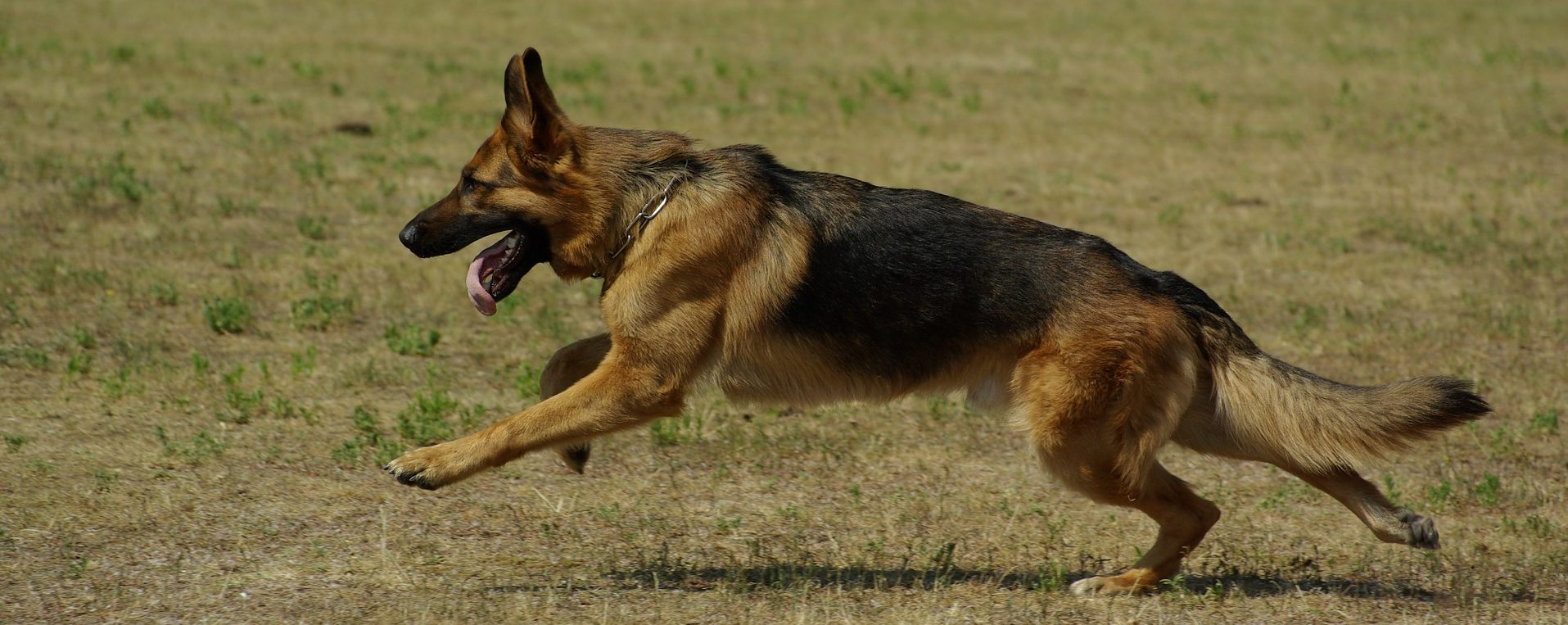 Atrofia muscular rehabilitación veterinaria
