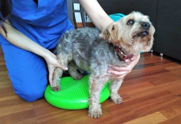 Ejercicios terapéuticos fisioterapia veterinaria Vet&Run