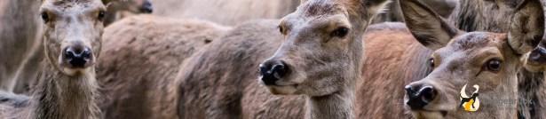 Tierärztliche Jagd in Dresden