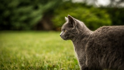 cat outside in grass