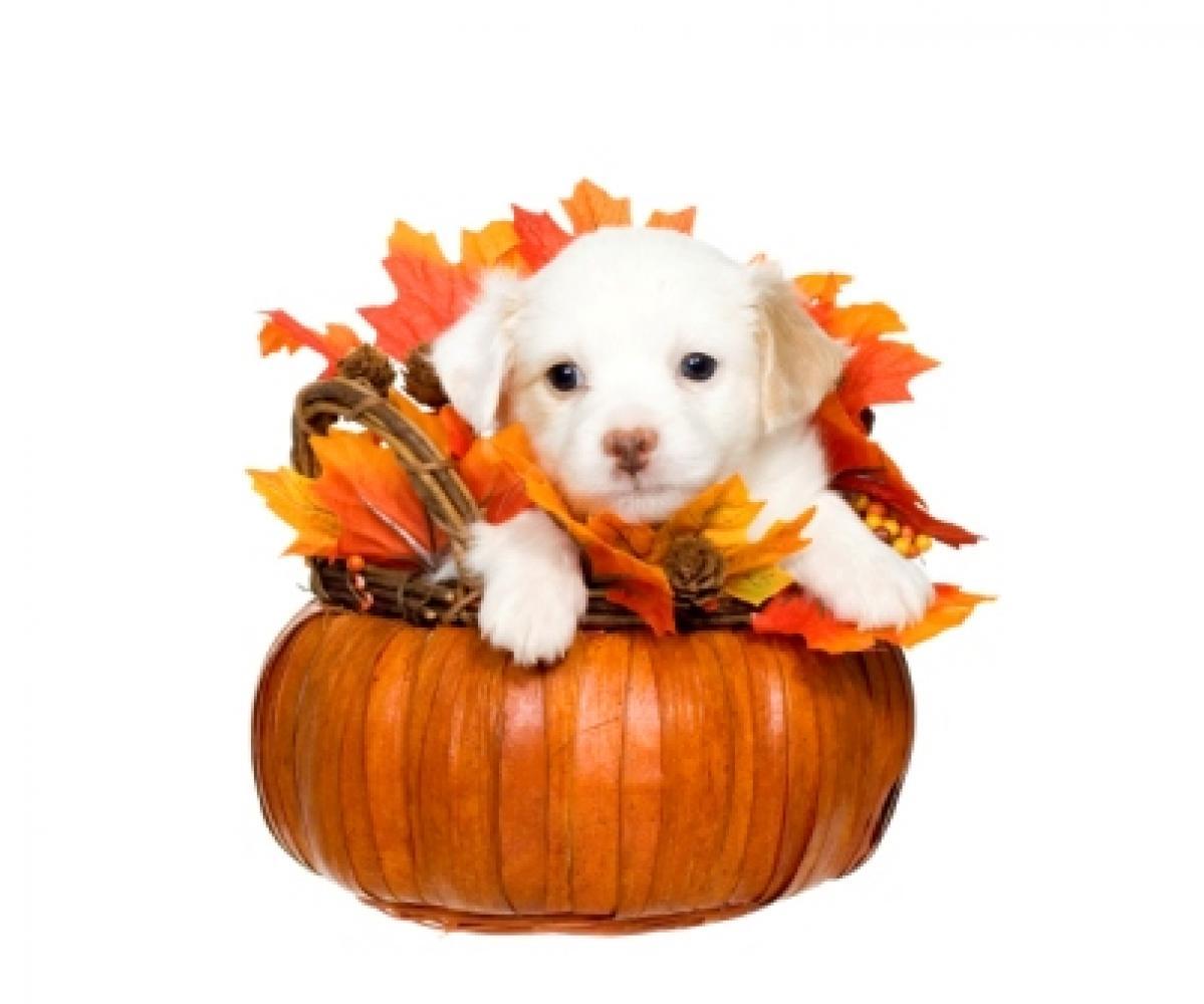 Thanksgiving Dog Albuquerque VetCo