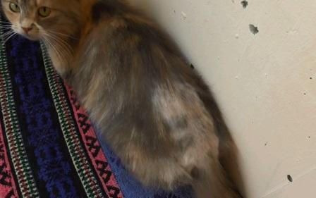 Анальные железы у кота