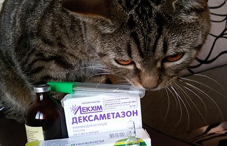 фуросемид для котов для чего