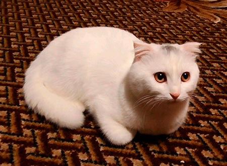 злой котенок