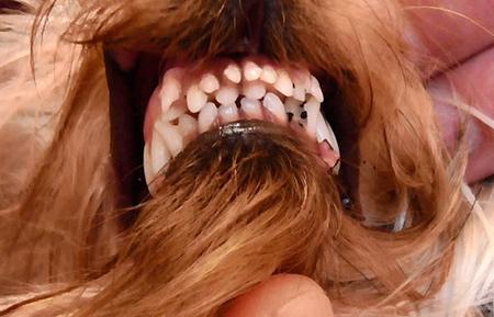 остались молочные зубы