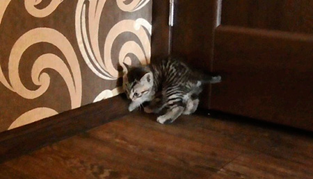 котенок ищет туалет