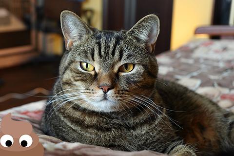 Кот Сэмыч