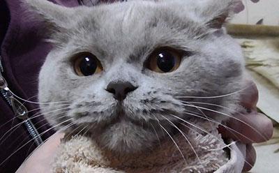 Кот не может сходить в туалет лекарство