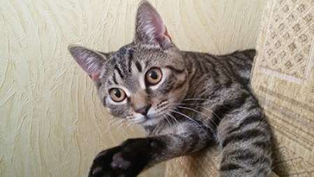 красивый котенко