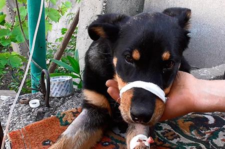 собака заболела парвовирозом