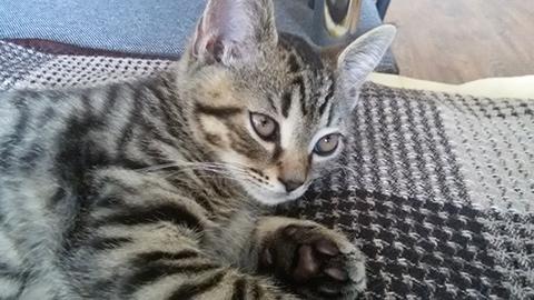 котенок Сэм