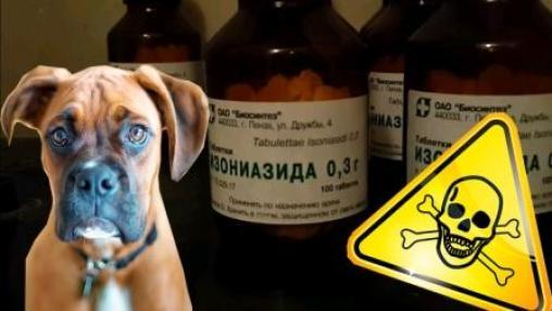 Изониазид токсичен для собак!