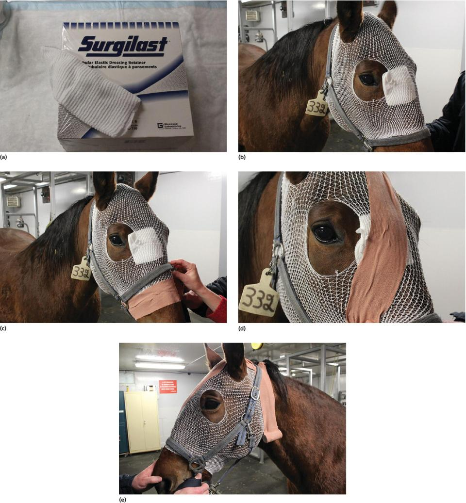 Photo displaying a box of Surgilast tubular elastic stretch net dressing retainer (a) and four photos of a horse with mesh stockinette on the face and adhesive tape (b–e).