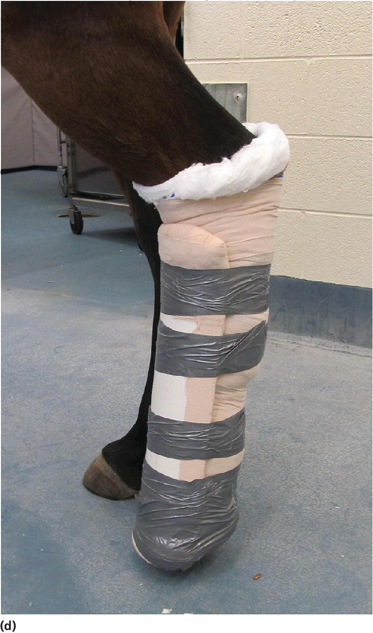 Photo displaying dorsal splint placement on the left hindlimb of a horse.