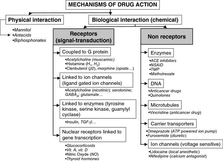 Structure shows mechanism of drug action leading to biological interaction and physical interaction with several divisions.