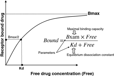 Graph shows free drug concentration versus receptor bound drug with plots for Bmax, maximal binding capacity and equilibrium dissociation constant.