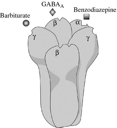 Diagram shows GABA receptor along with benzodiazepine, and barbiturate.