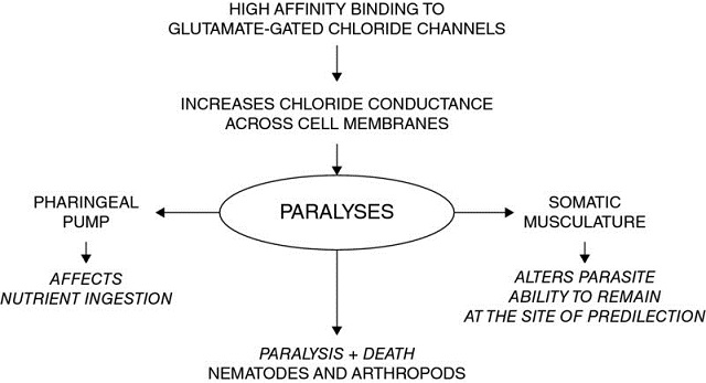 Chart shows high affinity binding to glutamate-gated chloride channels leads to increases chloride conductance across cell membranes, which leads to paralyses, et cetera.