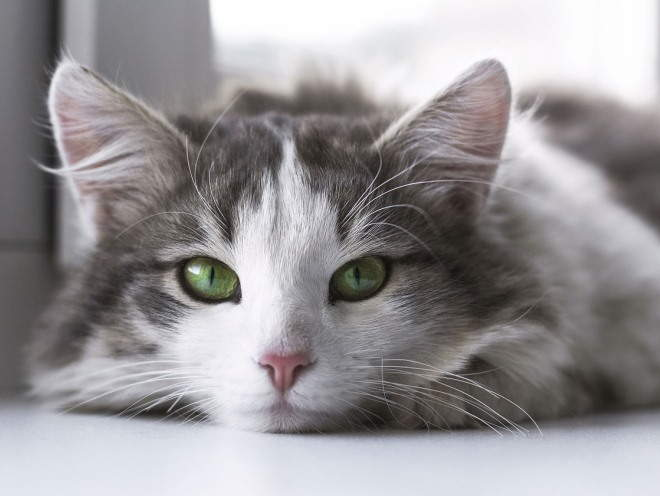 Ожирение у кошек и котов. Ожирение у кошек: когда любовь не во благо