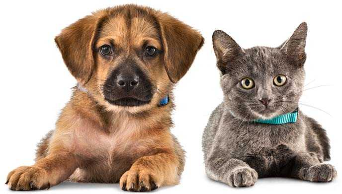 Mascotas Veterinario Algete