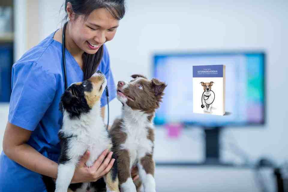 Veterinärsvenska – handbok för utländska veterinärer. Foto: FatCamera/iStock.com.