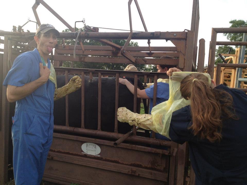 Texas A&M Veterinary Medicine & Biomedical