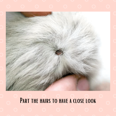 Part the fur to get a good view and try to keep your cat as calm as possible