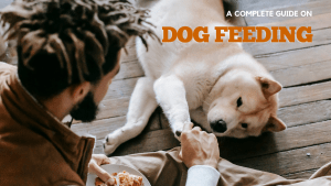 what to feed your dog?