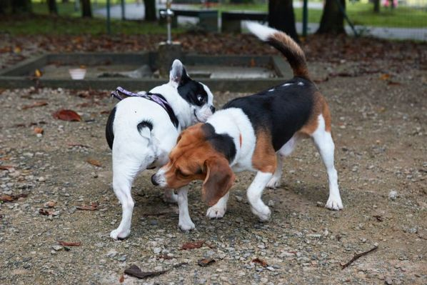 dog sniffing other dog's butt
