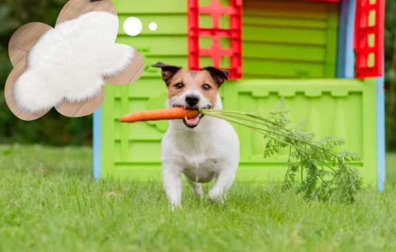 dog running with carrot in mouth