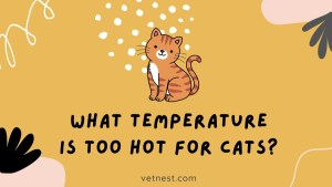 What Temperature is Too Hot for Cats