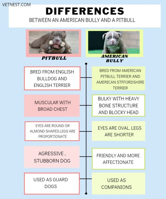 DIFFERENCES BETWEEN AMERICAN BULLY AND PITBULL