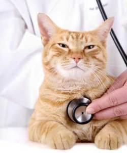 Кашель у кота выясняем причину и помогаем ему с данным недугом