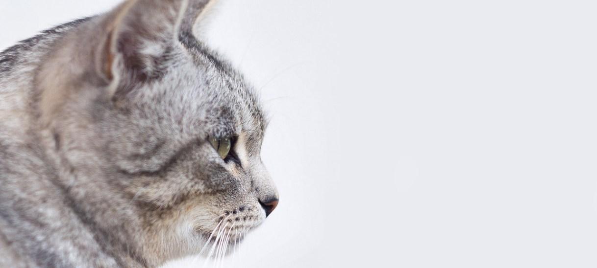 La verdad sobre las vacunas (parte II: gatos)