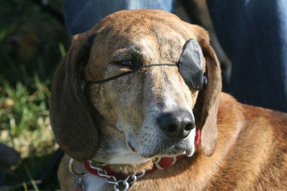 Pet Eye Medications Flickr Image
