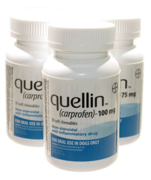 Quellin Carprofen Soft Chews for Dogs Now Available