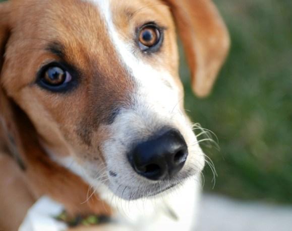 Flea Protection & Canine Influenza
