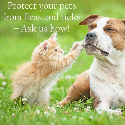 Protect Your Pets from Fleas & Ticks