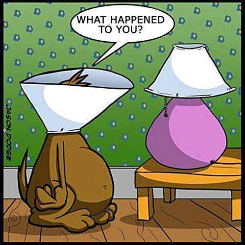 The Dreaded Cone of Shame…